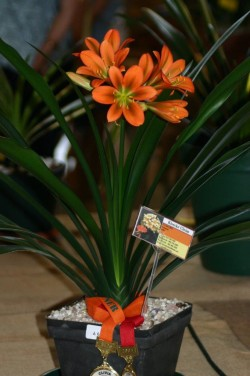 6049  Day Lily