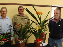K--2012--LCC-Interspecific-Show-BOS,-1st-RU-BOS-Clivia-without-Flowers